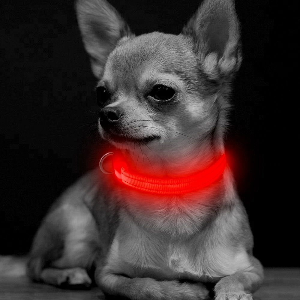 Pametna pasja ovratnica LED (Rdeča) M-medium